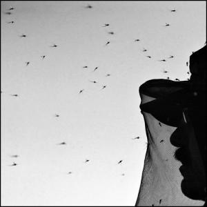 Как защитить загородный дом от насекомых и пыли